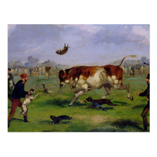 Bull Baiting oil on paper laid on panel Post Cards