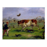 Bull Baiting (oil on paper laid on panel) Postcard