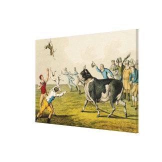 'Bull Baiting', pub. by Thomas McLean, 1820, (prin Stretched Canvas Print