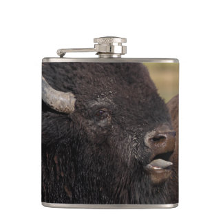 bull bison grunting flask