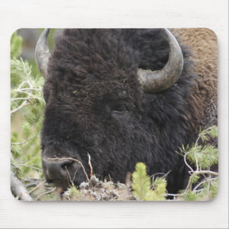 Bull Bison Resting in Forest, Yellowstone Mouse Mat