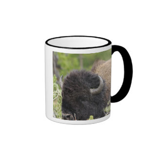 Bull Bison Resting in Forest, Yellowstone Mugs