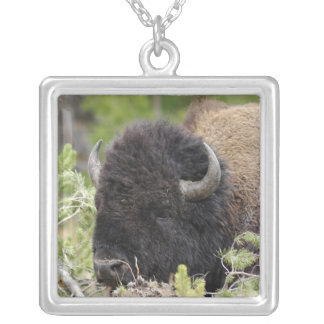 Bull Bison Resting in Forest, Yellowstone Silver Plated Necklace