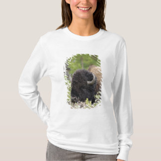 Bull Bison Resting in Forest, Yellowstone T-Shirt