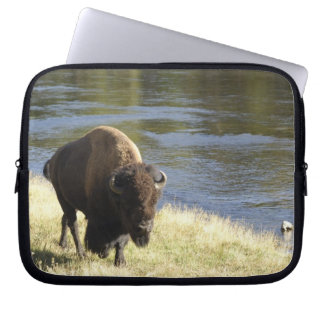Bull Bison Walking Along River, Yellowstone Laptop Sleeve