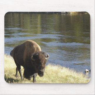 Bull Bison Walking Along River, Yellowstone Mouse Mat