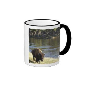Bull Bison Walking Along River, Yellowstone Coffee Mugs