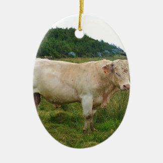 Bull Ceramic Oval Decoration
