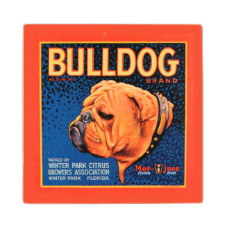 Bull Dog on a Blue Background Wood Coaster