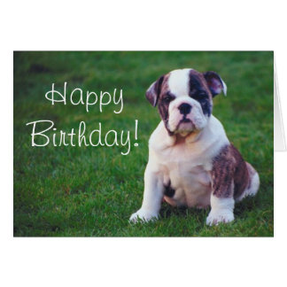 Bull Dog Puppy  Greeting card
