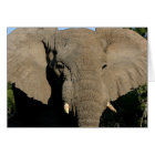Bull elephant note card