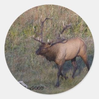 Bull Elk 1 Round Sticker