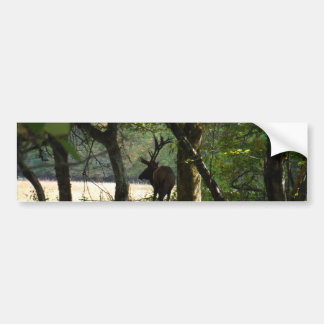 Bull Elk at wood edge Camouflage Bumper Stickers