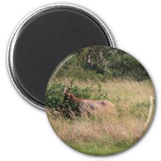 Bull Elk & Blackberries Magnets