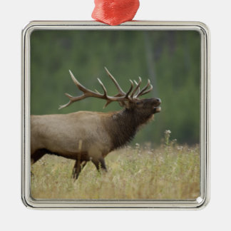 Bull Elk bugling, Yellowstone NP, Wyoming Christmas Ornament