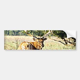 Bull Elk Bumper Sticker