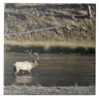 Bull Elk Crossing Madison River, Yellowstone 2 Large Square Tile