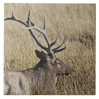 Bull Elk Crossing Madison River, Yellowstone 3 Large Square Tile