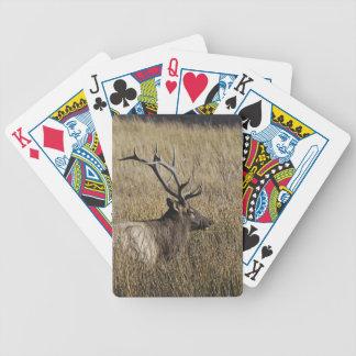 Bull Elk Crossing Madison River, Yellowstone Card Deck