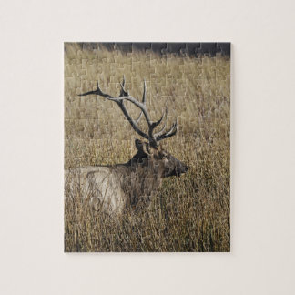 Bull Elk Crossing Madison River, Yellowstone Jigsaw Puzzles