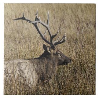Bull Elk Crossing Madison River, Yellowstone Large Square Tile