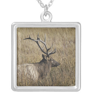 Bull Elk Crossing Madison River, Yellowstone Silver Plated Necklace