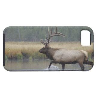 Bull Elk crossing river in snowstorm, iPhone 5 Cases