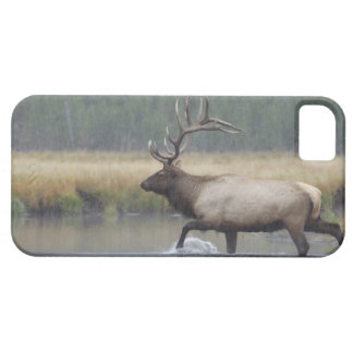 Bull Elk crossing river in snowstorm, iPhone 5 Covers