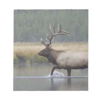 Bull Elk crossing river in snowstorm, Notepad