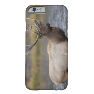 bull elk crossing river, Yellowstone NP, Wyoming Barely There iPhone 6 Case