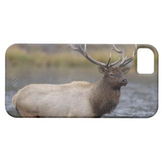 bull elk crossing river, Yellowstone NP, Wyoming iPhone 5 Case