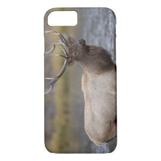 bull elk crossing river, Yellowstone NP, Wyoming iPhone 8/7 Case