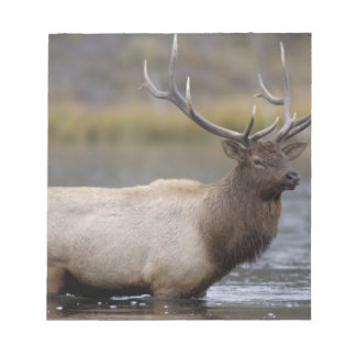 bull elk crossing river, Yellowstone NP, Wyoming Notepad