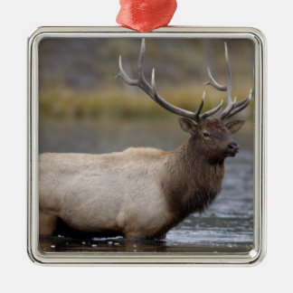 bull elk crossing river, Yellowstone NP, Wyoming Silver-Colored Square Decoration