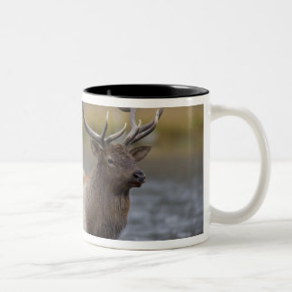 bull elk crossing river, Yellowstone NP, Wyoming Two-Tone Coffee Mug