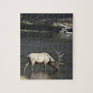 Bull Elk Drinking from Madison River Puzzle