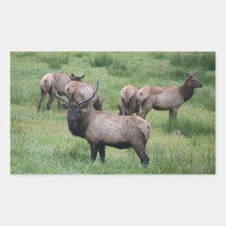 Bull Elk & Herd Rectangular Sticker