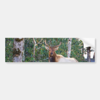 Bull Elk in Rhododendrons Bumper Sticker