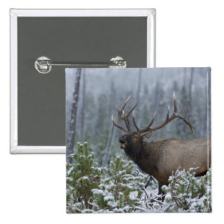 Bull Elk in snow calling, bugling, Yellowstone 15 Cm Square Badge