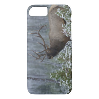 Bull Elk in snow calling, bugling, Yellowstone iPhone 8/7 Case