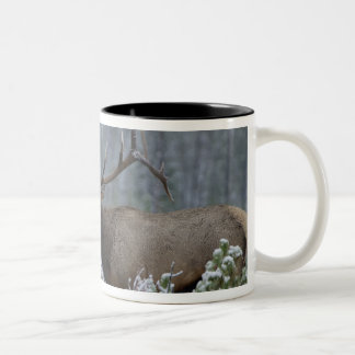 Bull Elk in snow calling, bugling, Yellowstone Two-Tone Coffee Mug