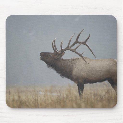 Bull Elk in snow storm calling, bugling, Mouse Pad