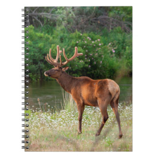 Bull Elk in the National Bison Range, Montana 2 Spiral Notebook
