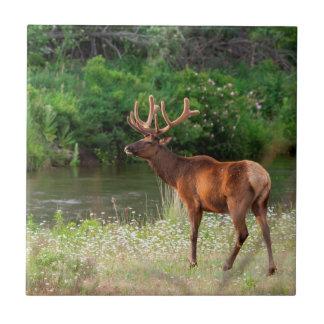 Bull Elk in the National Bison Range, Montana 2 Tile