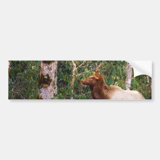 Bull Elk in Trees Bumper Stickers