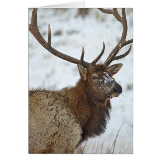 Bull elk in winter in Yellowstone National Card