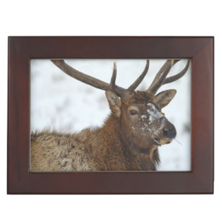 Bull elk in winter in Yellowstone National Keepsake Box