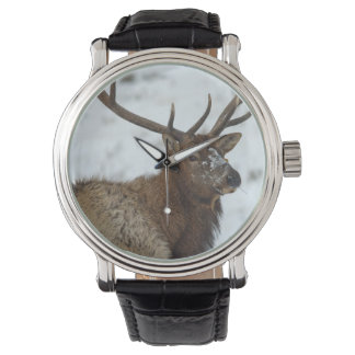 Bull elk in winter in Yellowstone National Wristwatches