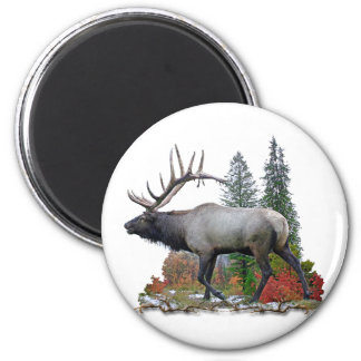 Bull Elk Magnets