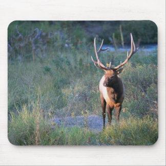 Bull Elk Mouse Pad
